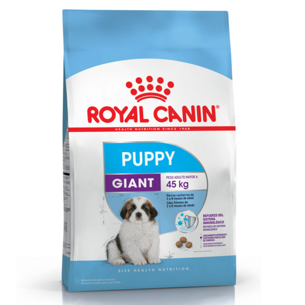 Royal Giant Puppy